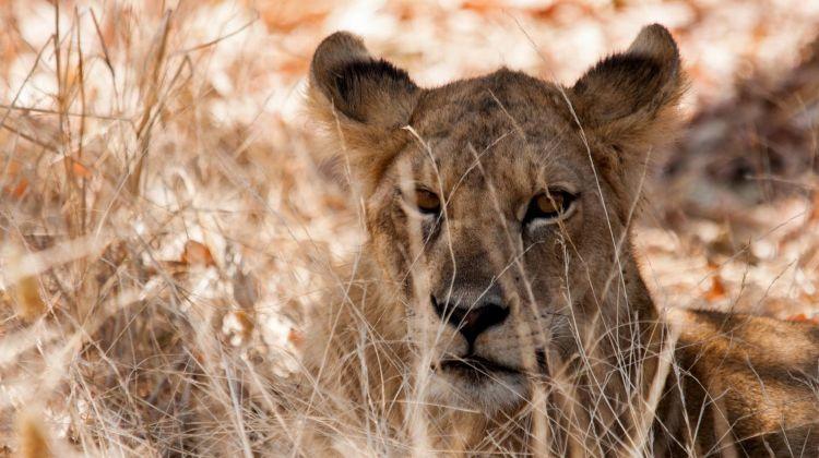 13 days Safari for in Southern circuit.