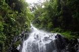Bwindi Impenetrable National Park - Grassrootz Uganda