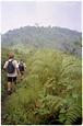 Bwindi Impenetrable National Park, Uganda photos — Hey Brian?
