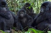 Day 4: Bwindi Impenetrable Forest to Lake Mburo National Park .